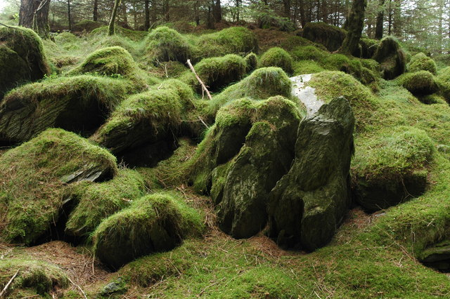 Moss covered rocks, Beddgelert Forest - geograph.org.uk - 542866