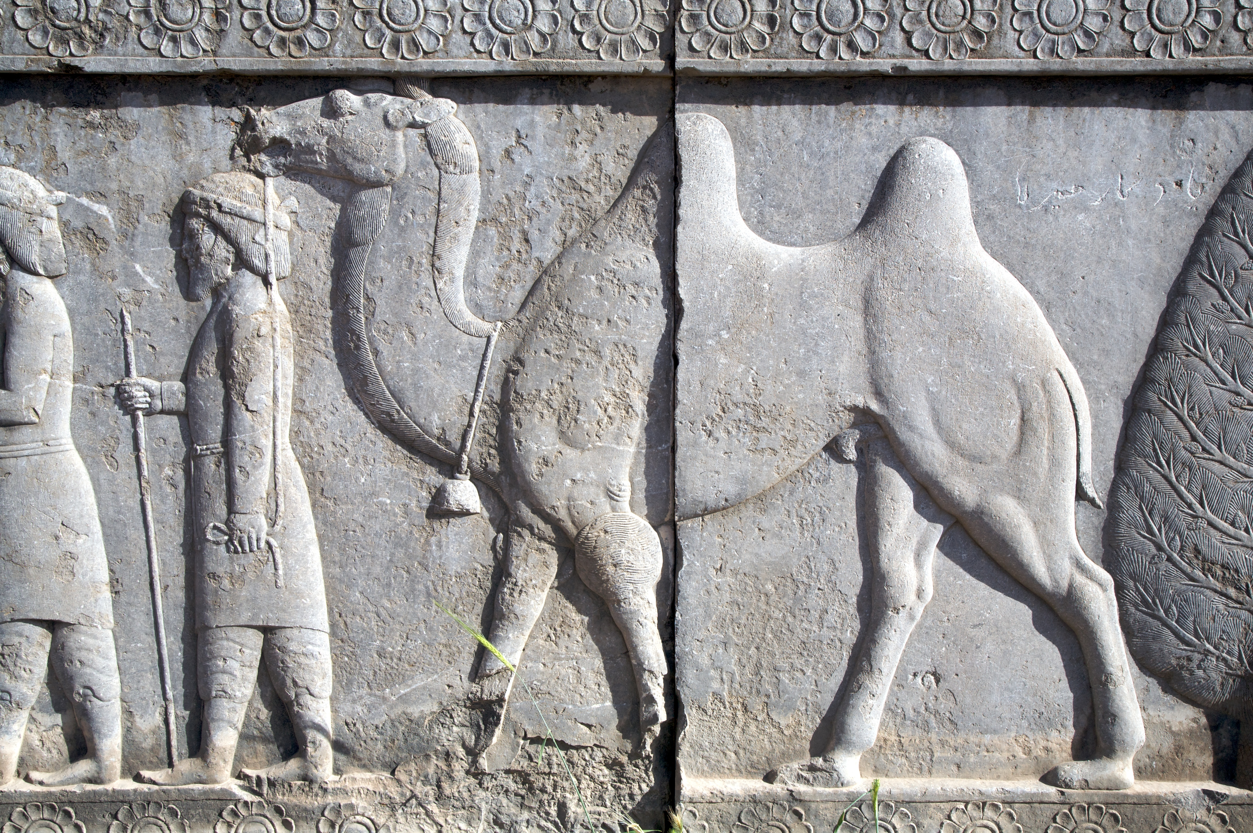 File persepolis relief with camel g wikimedia commons
