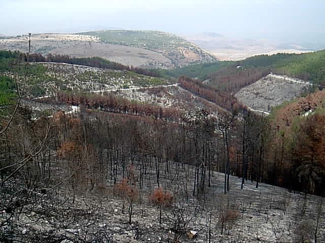 יער שרוף בביריה
