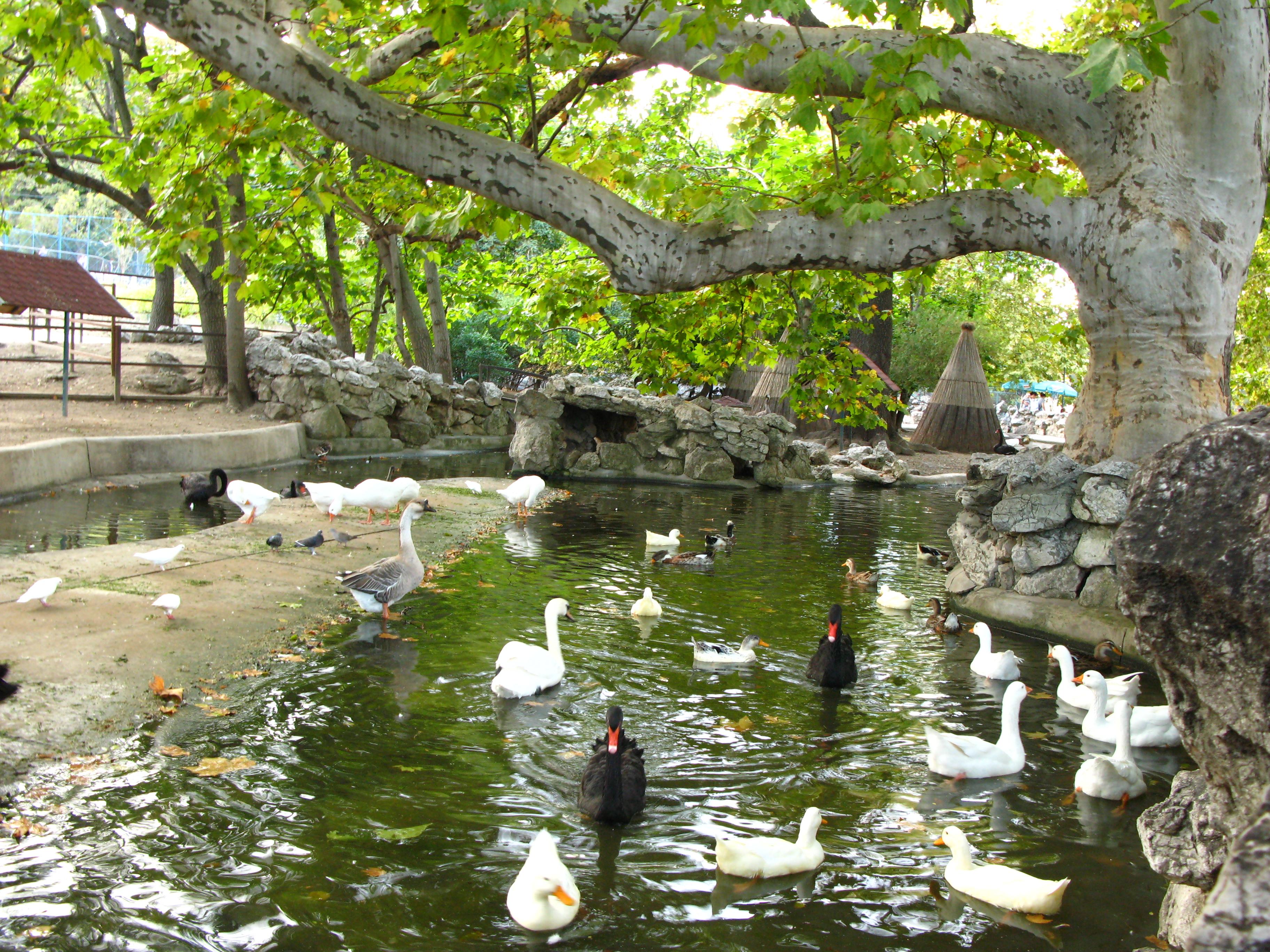 zoo park næstved gamle bryster