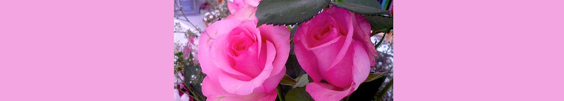 Розы для Богородицы.