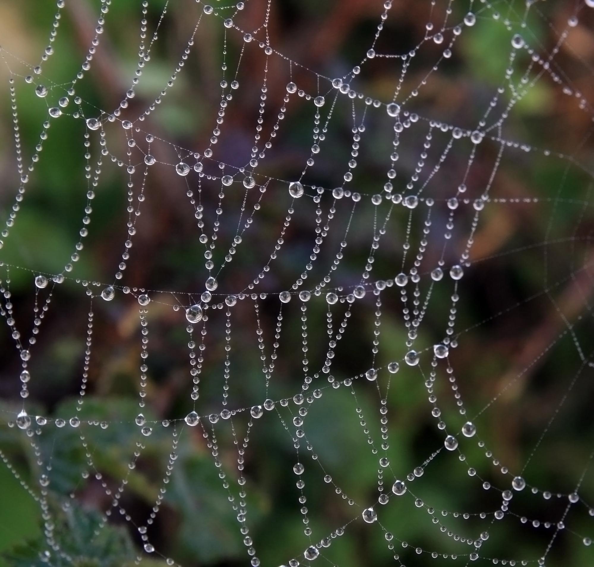 이슬이 맺힌 거미줄 사진
