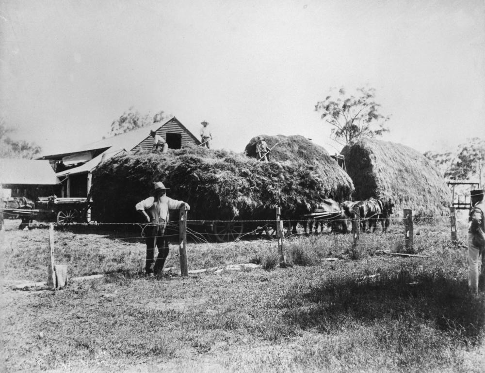 File Statelibqld 1 161393 Making Hay On Green Hills Farm