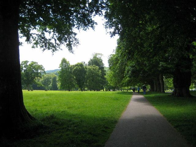 The walk through the Park - Lanhydrock - geograph.org.uk - 1351027