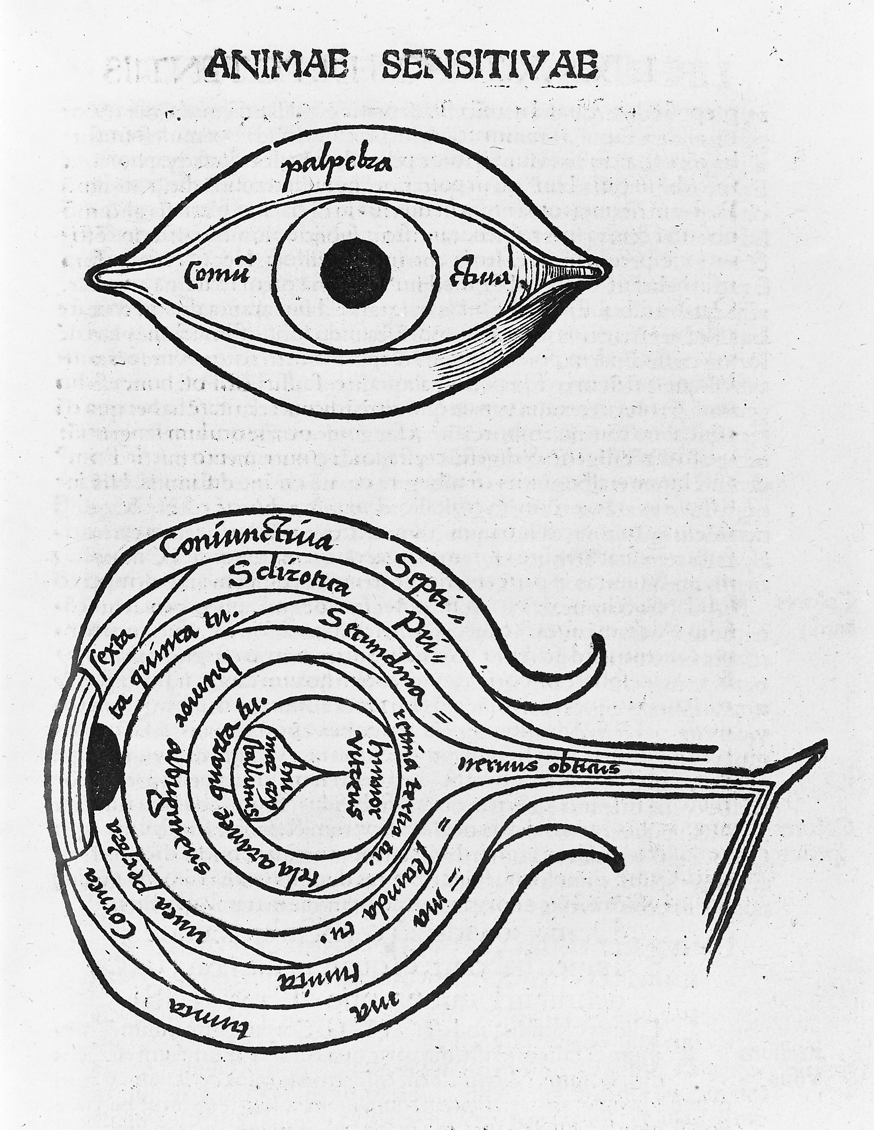 FileWoodcuts Anatomy Of The Eye Circa 1503 Wellcome M0010695