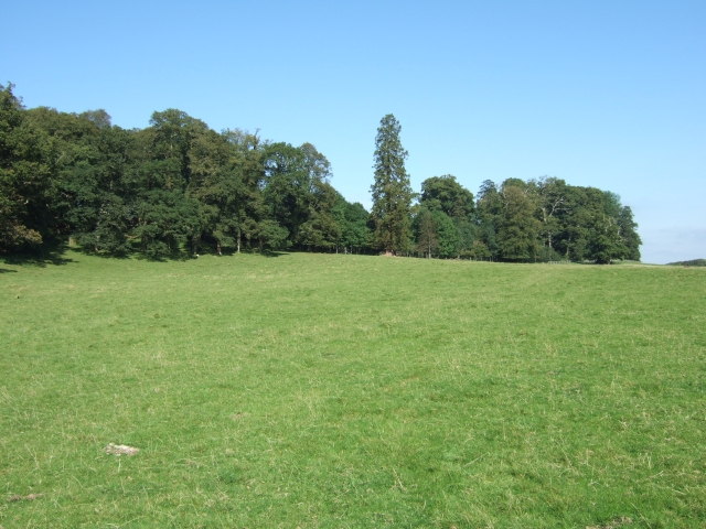 Woods beside the Deer Park in Dinefwr Park - geograph.org.uk - 1537793