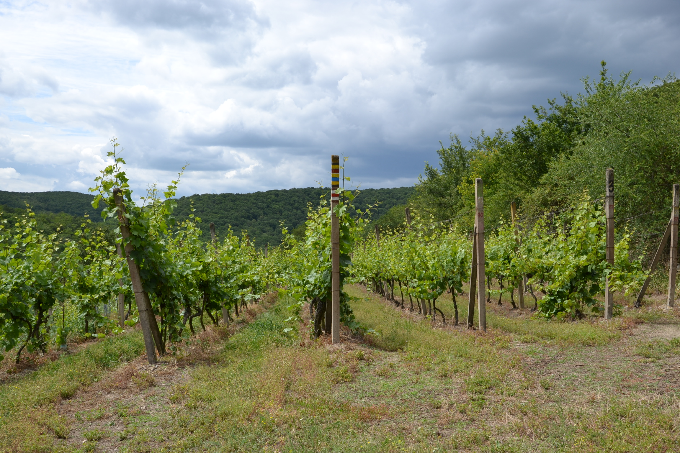 Šobes winery, Moravia.JPG
