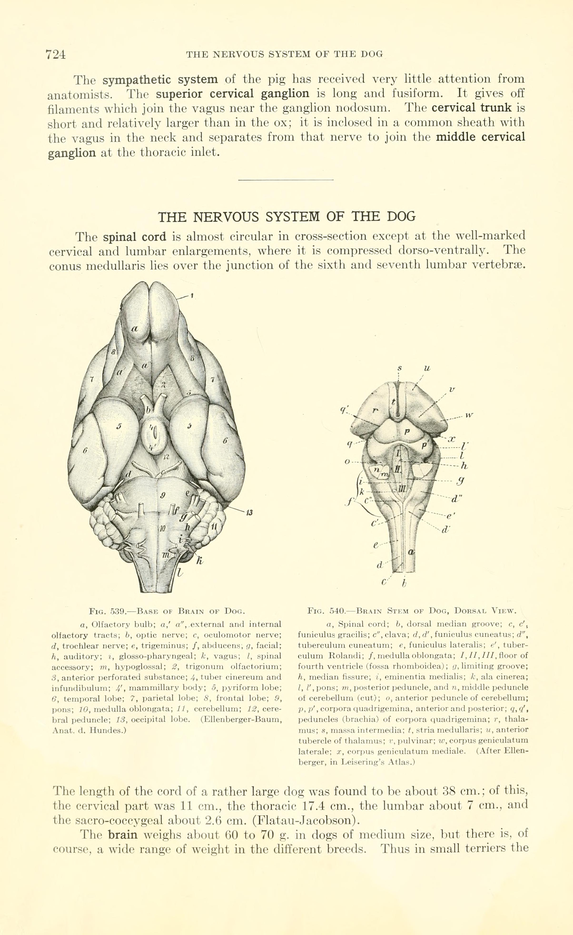 File:A text-book of veterinary anatomy (Page 724) BHL18587848.jpg ...