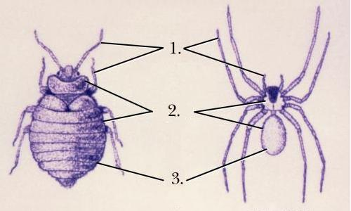 تعبير شامل الحشرات