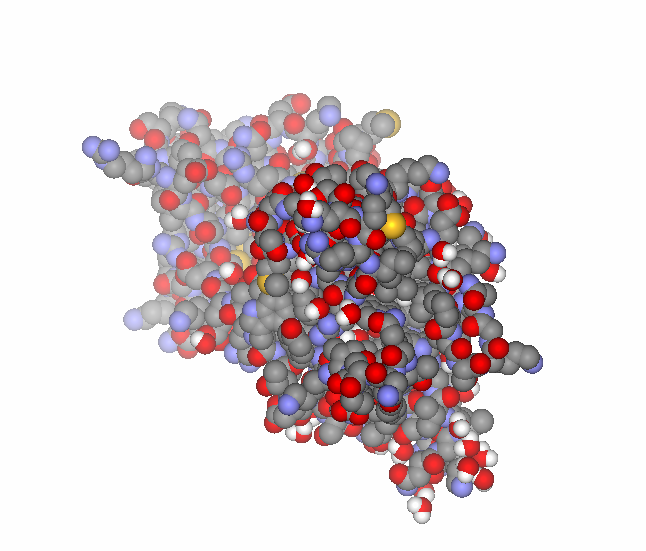 Brain-derived neurotrophic factor - PDB id 1BND.png