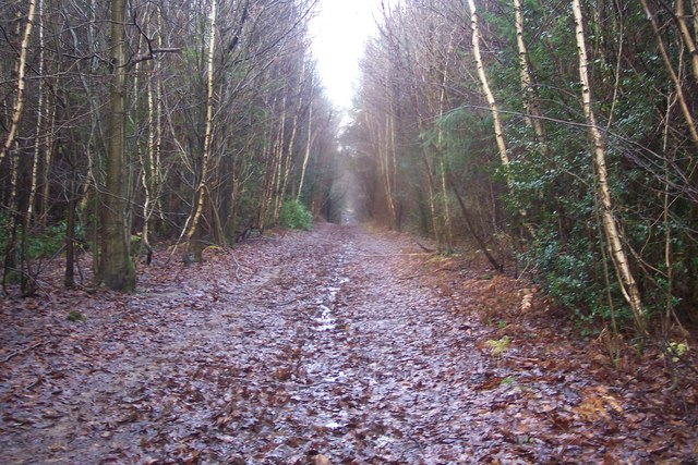 Bridleway in Chittenden Wood - geograph.org.uk - 1620557