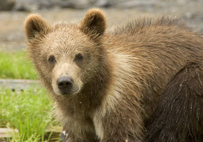 Bear and cub dating in Brisbane