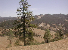 Clear Creek Management Area.jpg