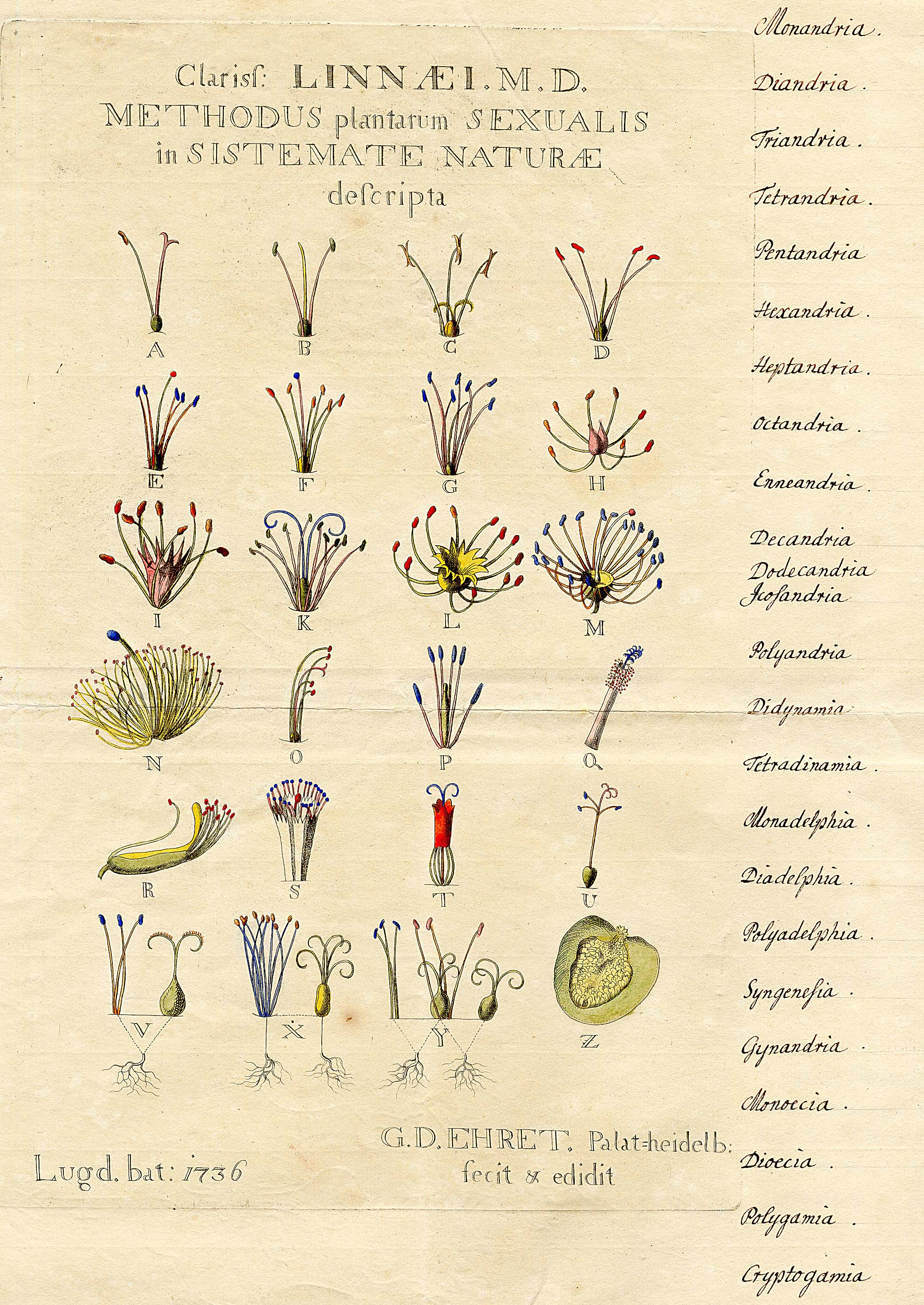 Historical botanical illustration of the day | nat waddell ...