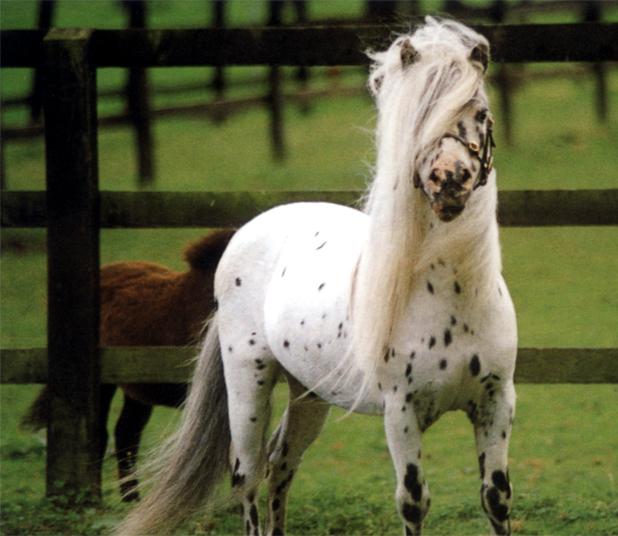 Equus At Cavalli
