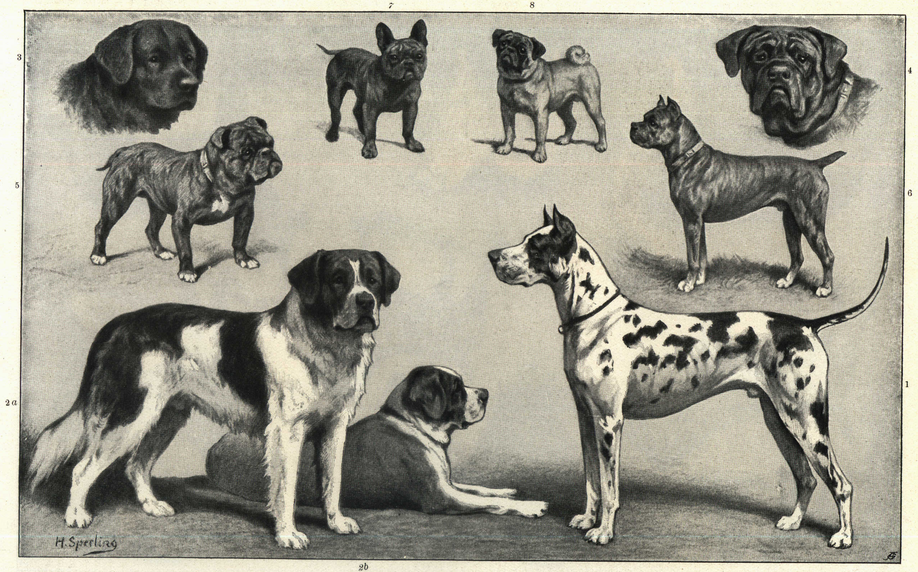 Ancient Dog Breeds