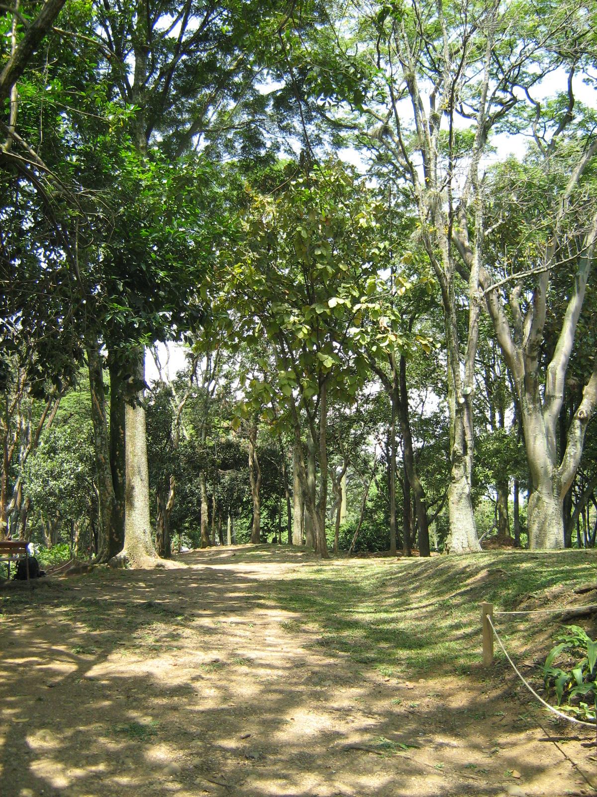File jardin botanico de medellin arboles jpg wikimedia for Arbol para jardin