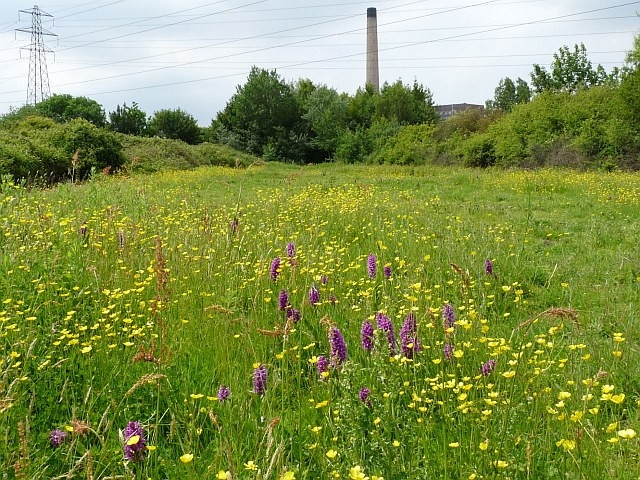 Orchids and Buttercups on the Newport Wetlands Reserve - geograph.org.uk - 1346831