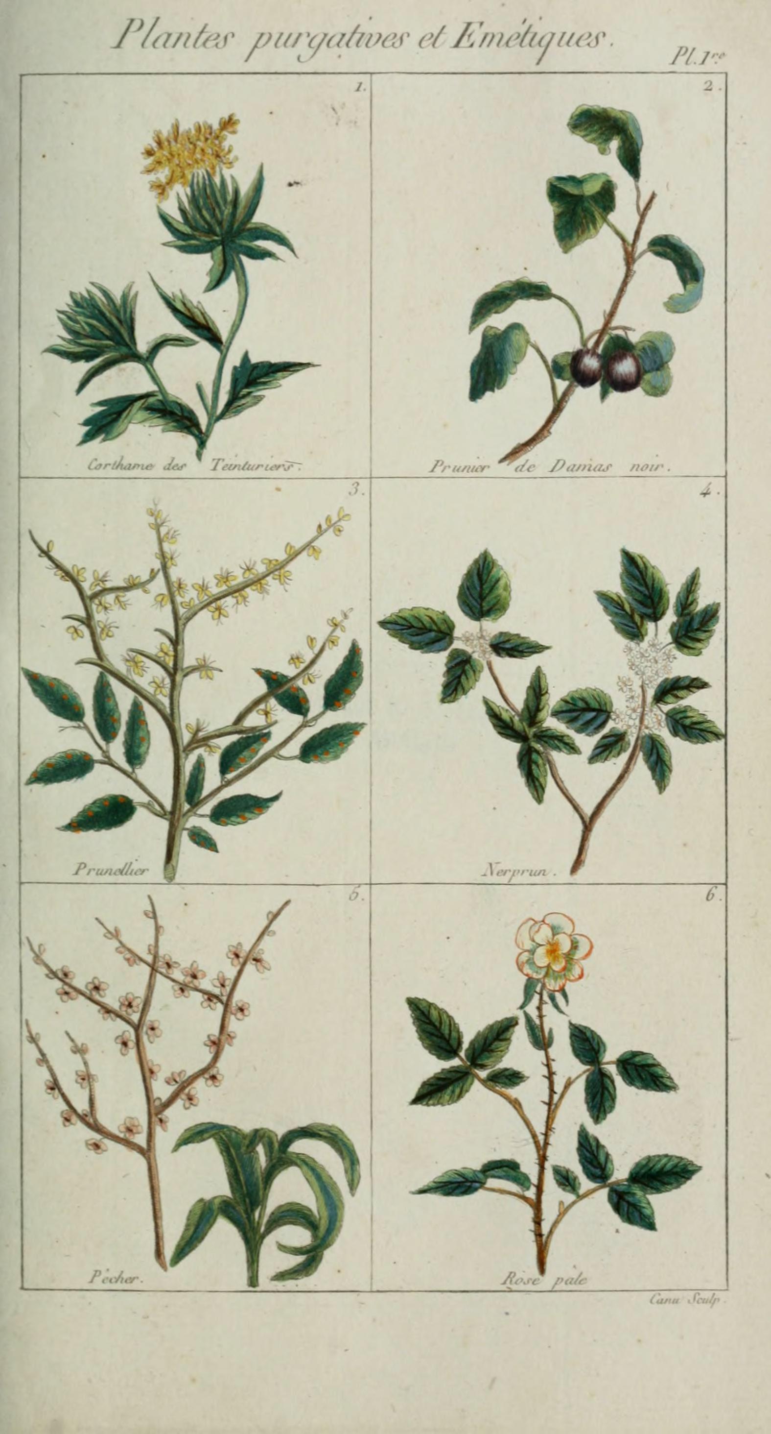 File plantes usuelles indig nes et exotiques pl 1 for Plante exotique
