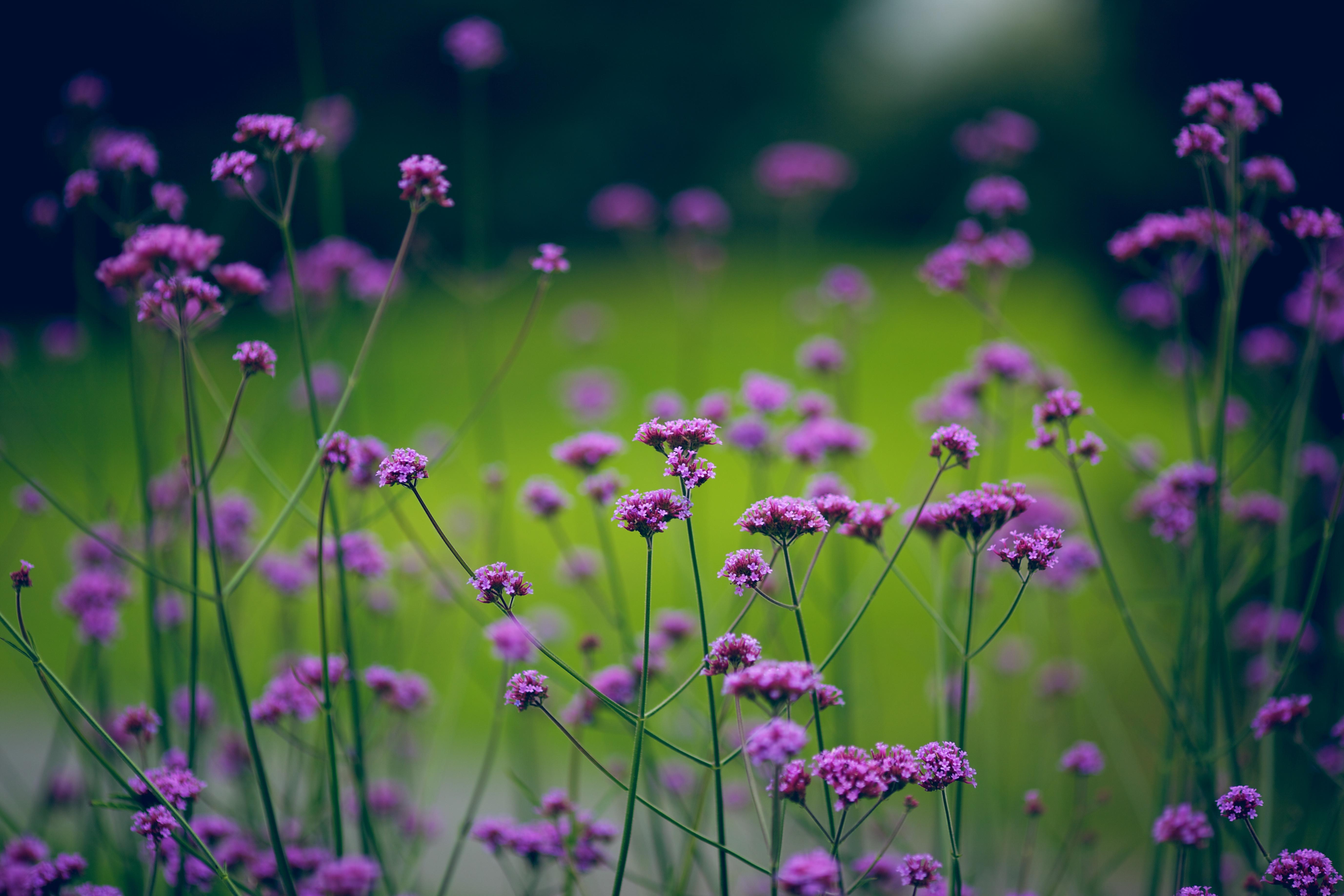 Download Wallpaper 1920x1200 Purple, Green, Flowers, Grass ...