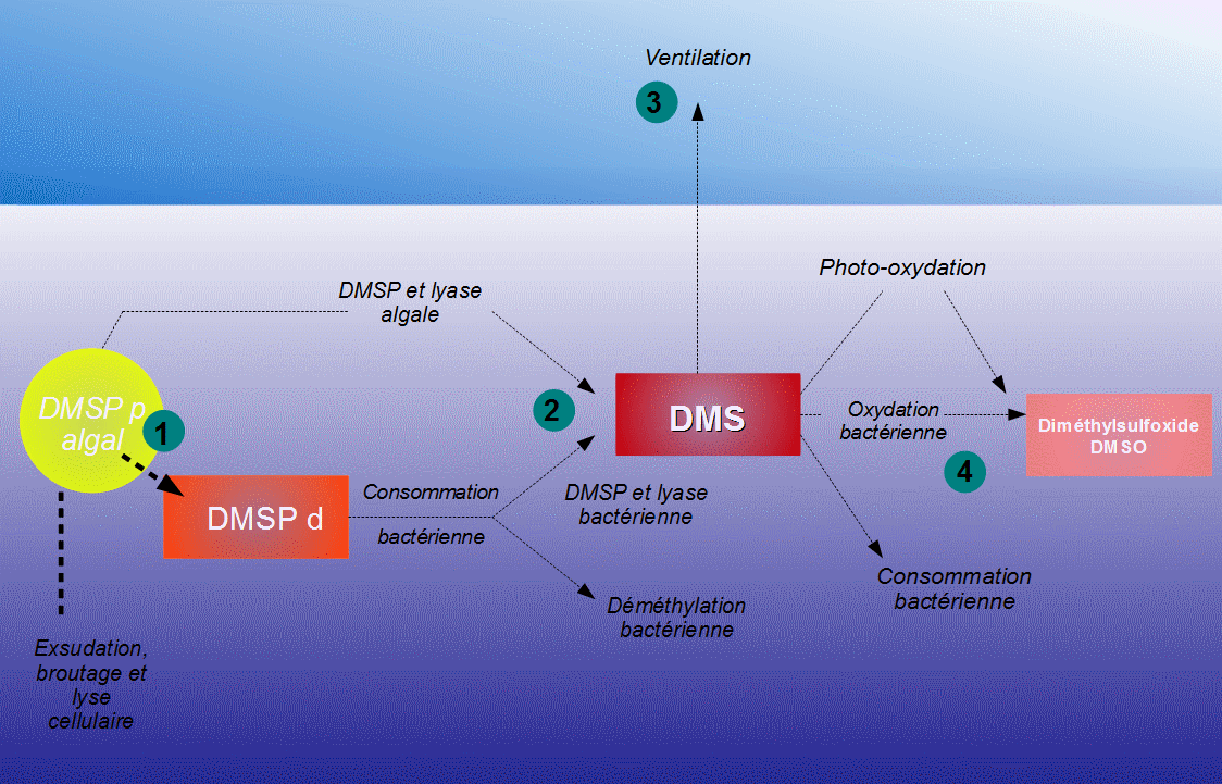 File:Schema DMS.png - Wikimedia Commons