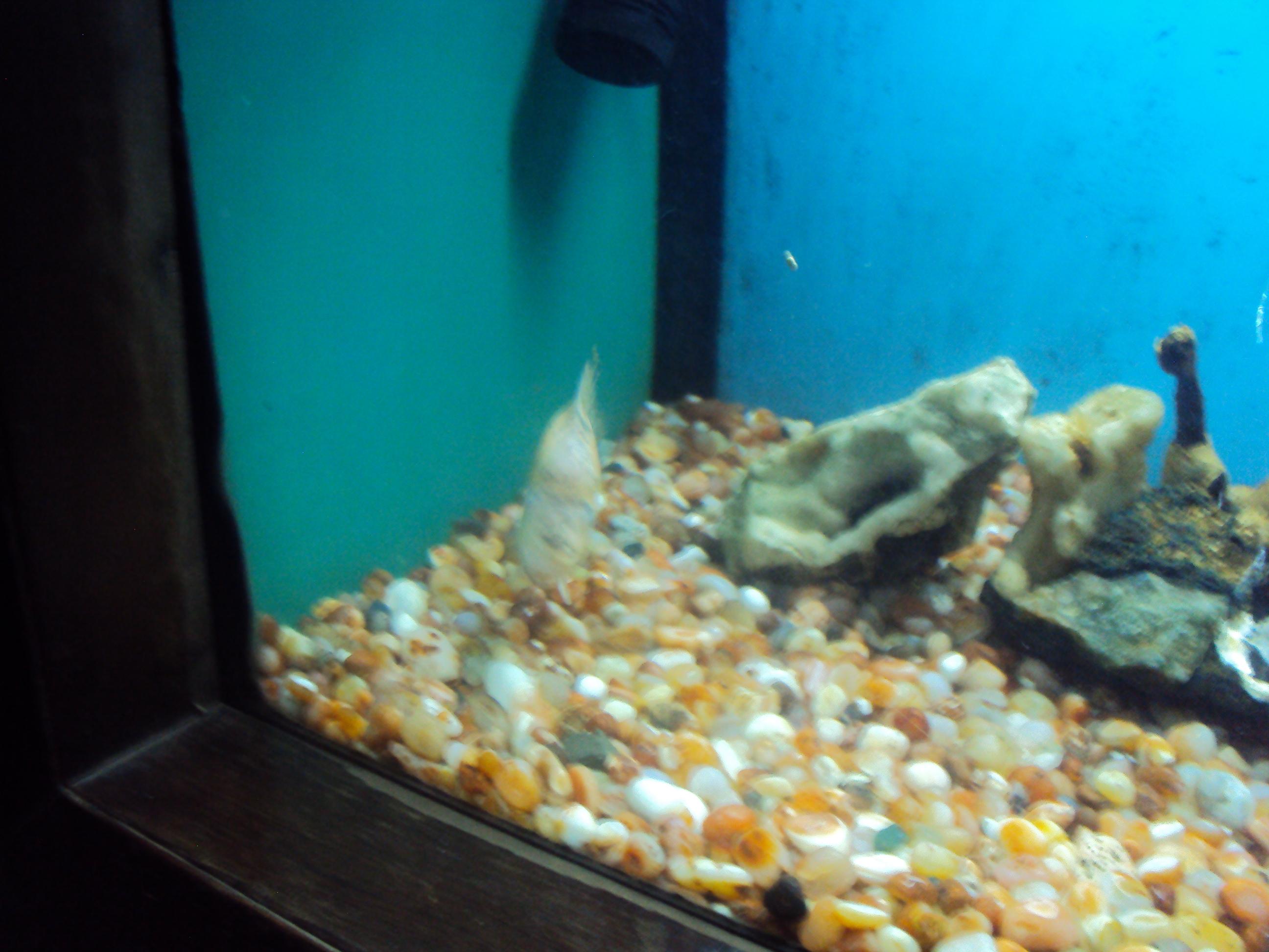 Fish aquarium tarapur - File Taraporewala Aquarium13 Jpg
