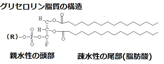 「グリセロリン脂質」の画像検索結果