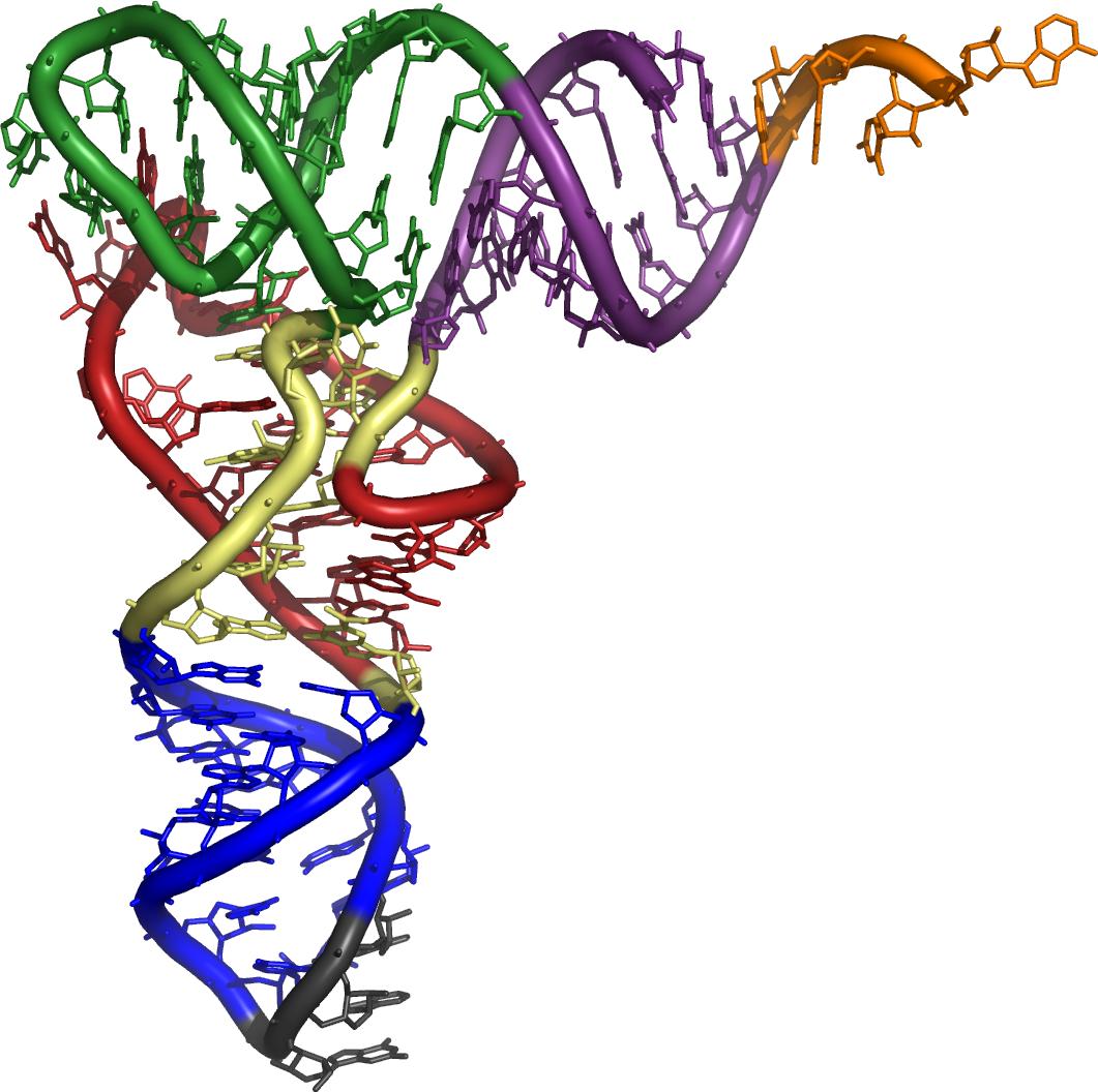 external image 3d_tRNA.png
