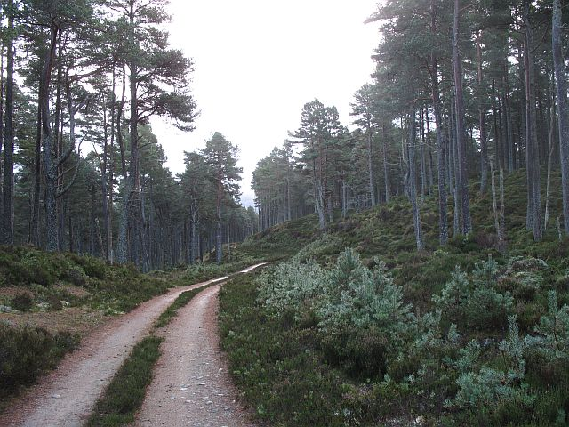 Abernethy Forest - geograph.org.uk - 612811