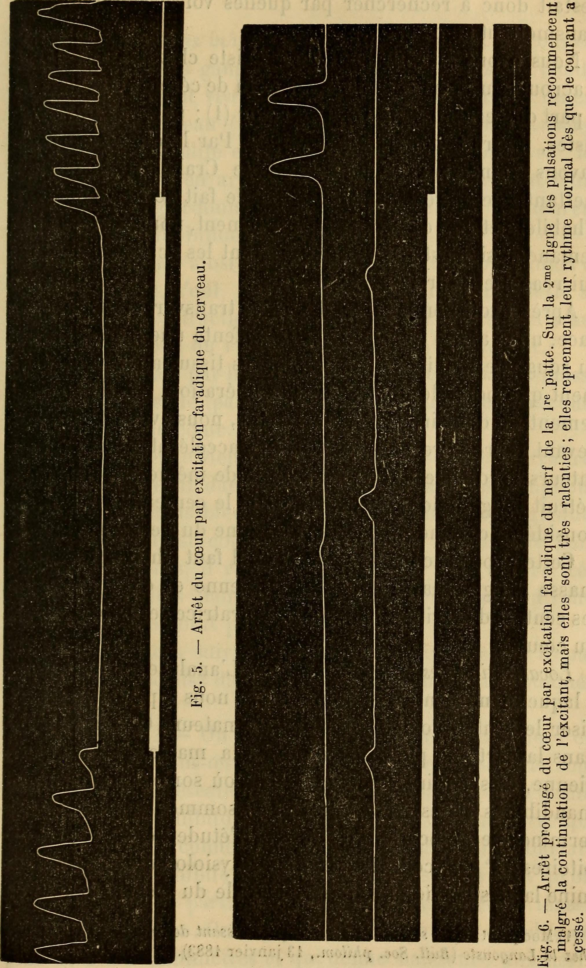 By Milne-Edwards, H. (Henri), 1800-1885;Audouin, Jean Victor, 1797-1841; Milne-Edwards, Alphonse, 1835-1900; Perrier, Edmond, 1844-1921; Bouvier, E.-L., 1856-1944;Grassé, Pierre Paul, 1895- [No restrictions], via Wikimedia Commons