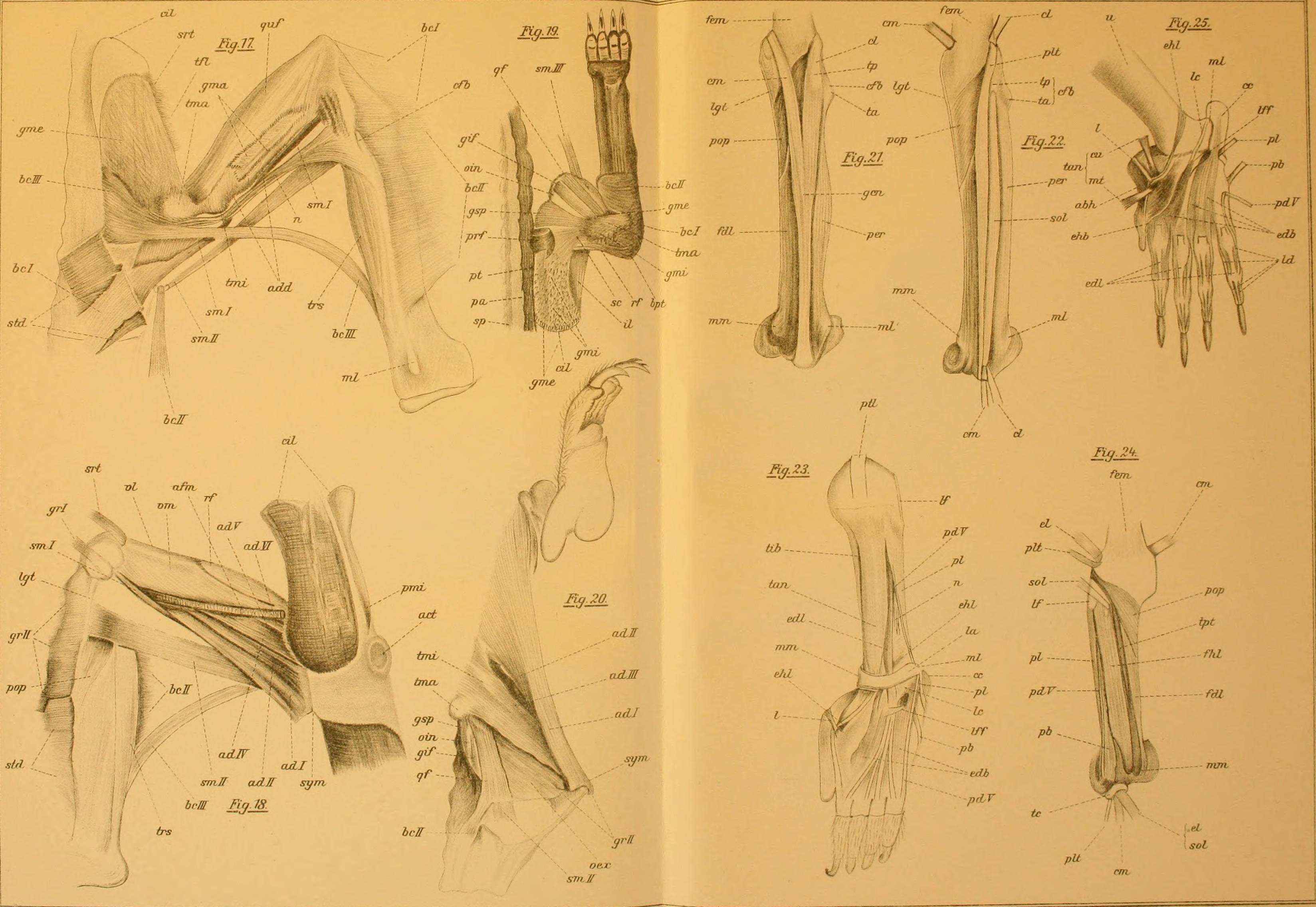 Filearchiv Für Naturgeschichte 1910 19708468304jpg