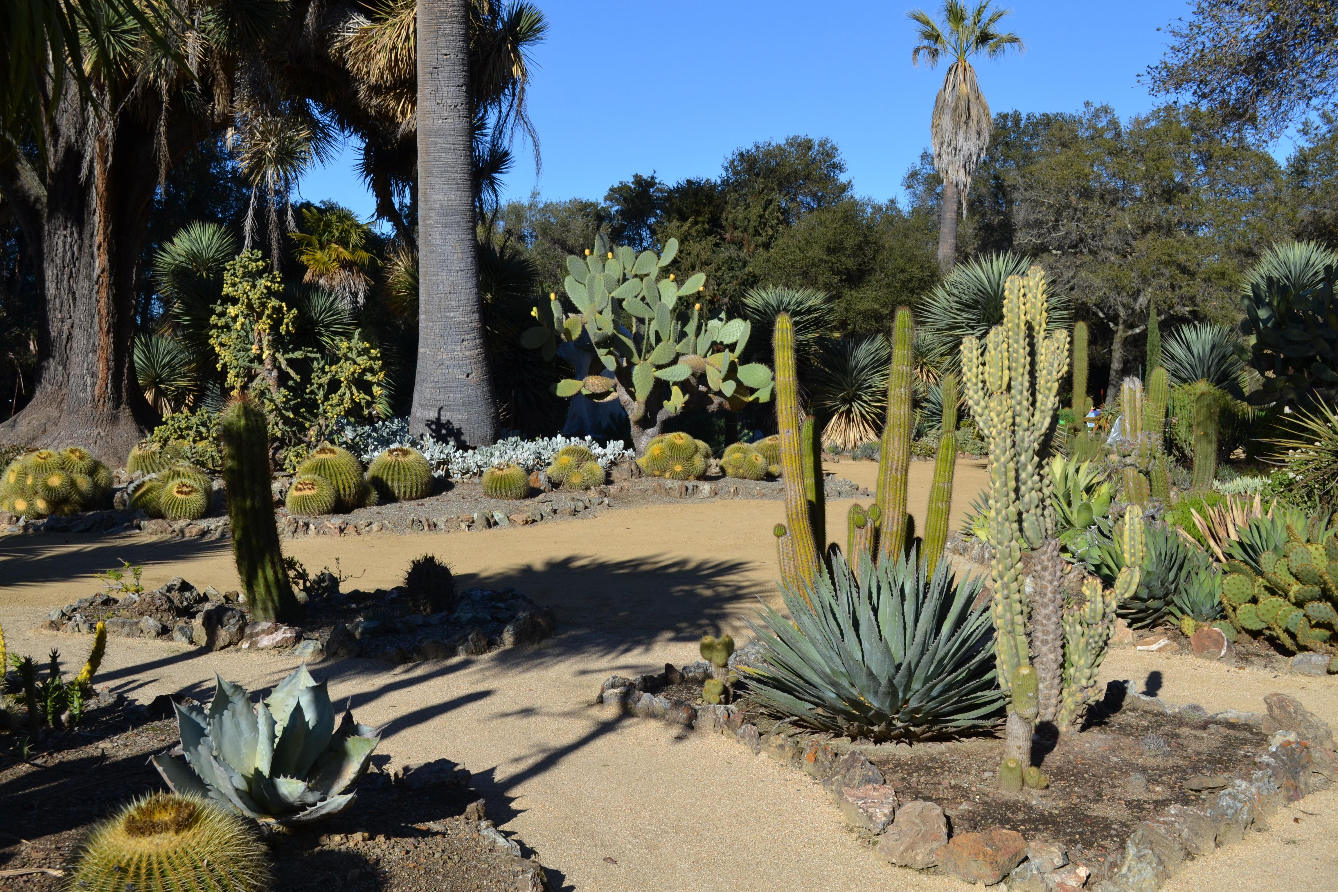 File:Arizona Cactus Garden At Stanford University 2.JPG