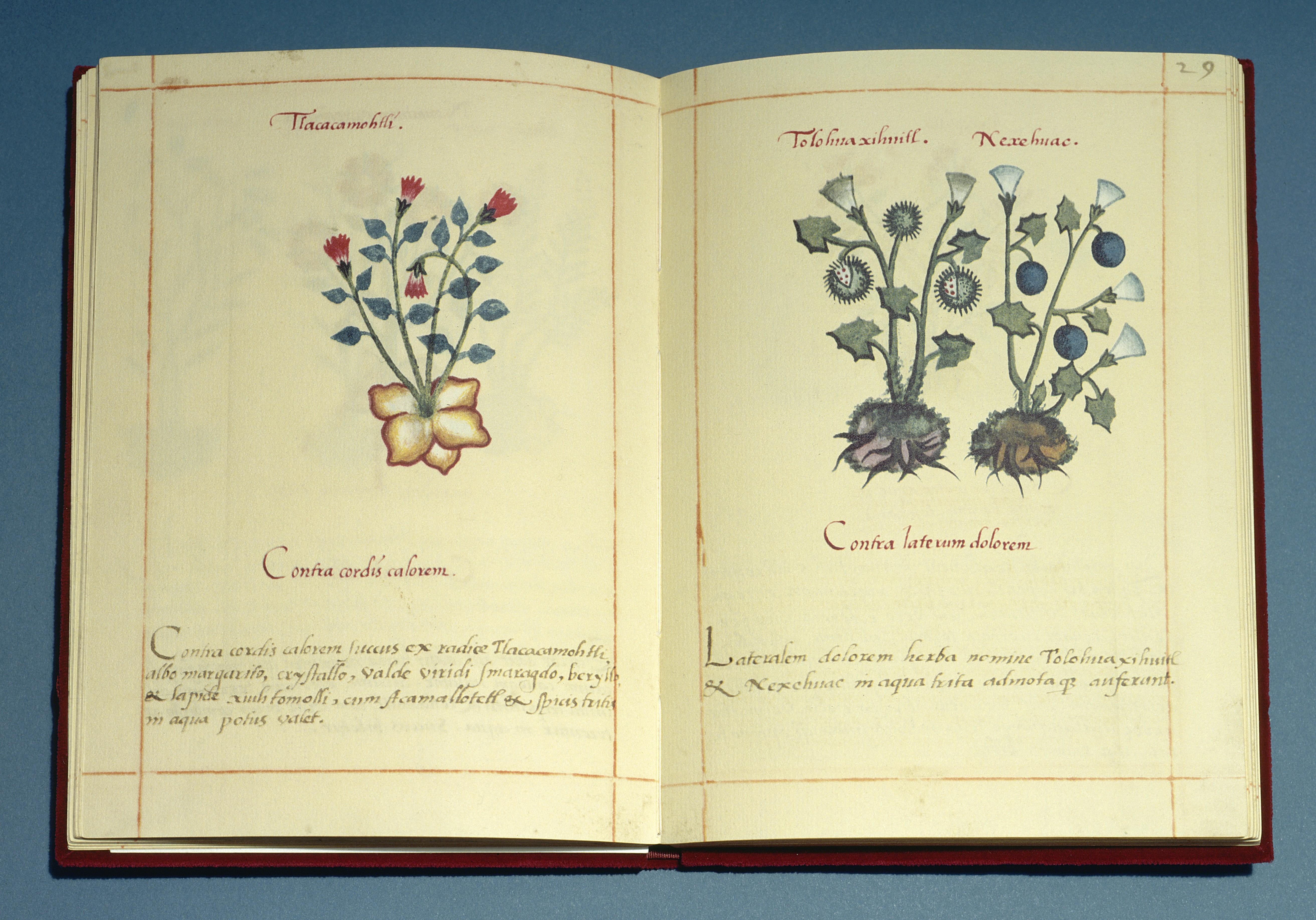 book Noeline: Longterm