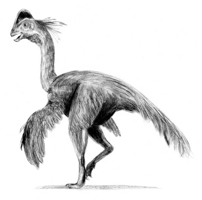Resultado de imagen de caenagnathidae