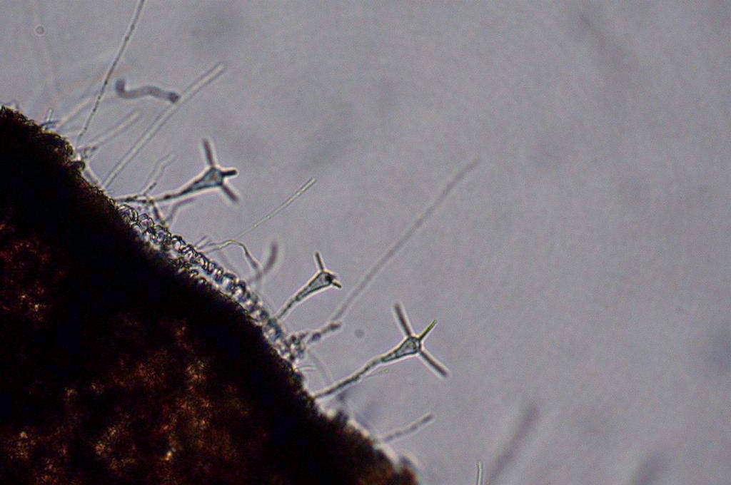 állatorvosi gyógymód a parazitákról