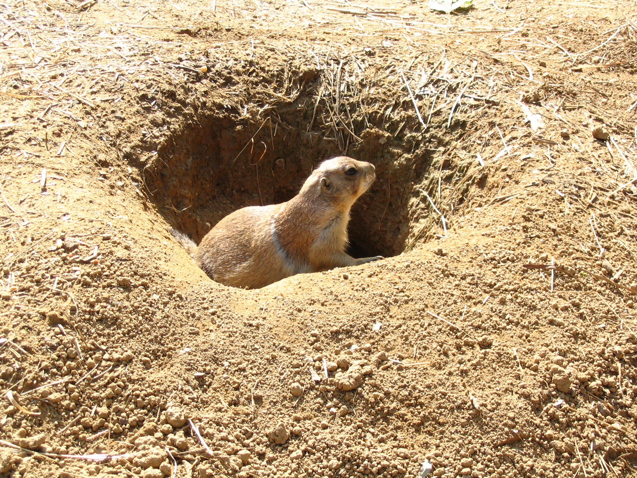 an overview of the characteristics of prairie dogs While the term animal language is widely used thus animal language typically does not include bee dancing, bird song, whale song, dolphin signature whistles, prairie dogs, nor the communicative systems found in most social mammals.