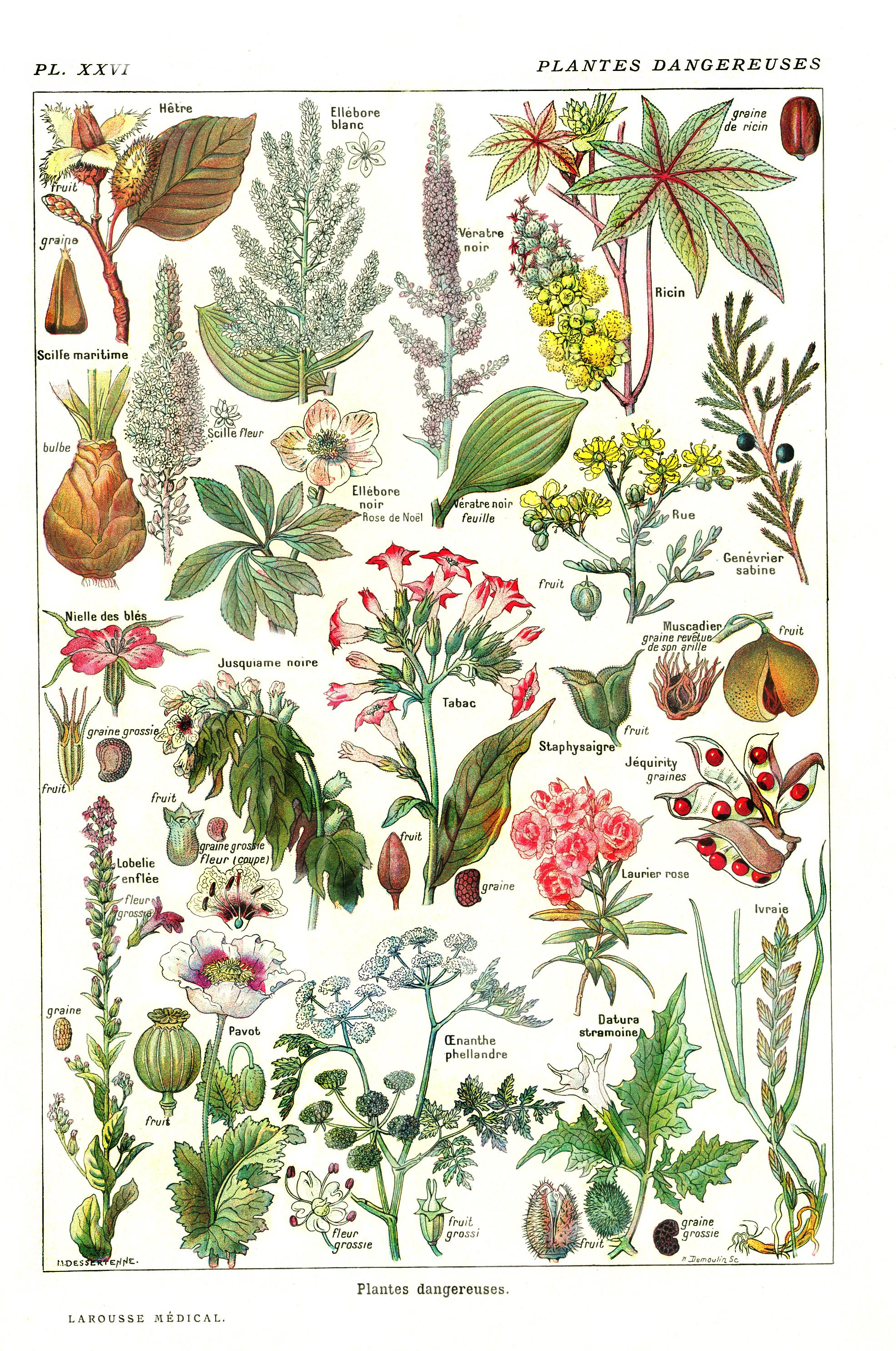 Blog lifestyle d 39 un petit canard for Liste plantes