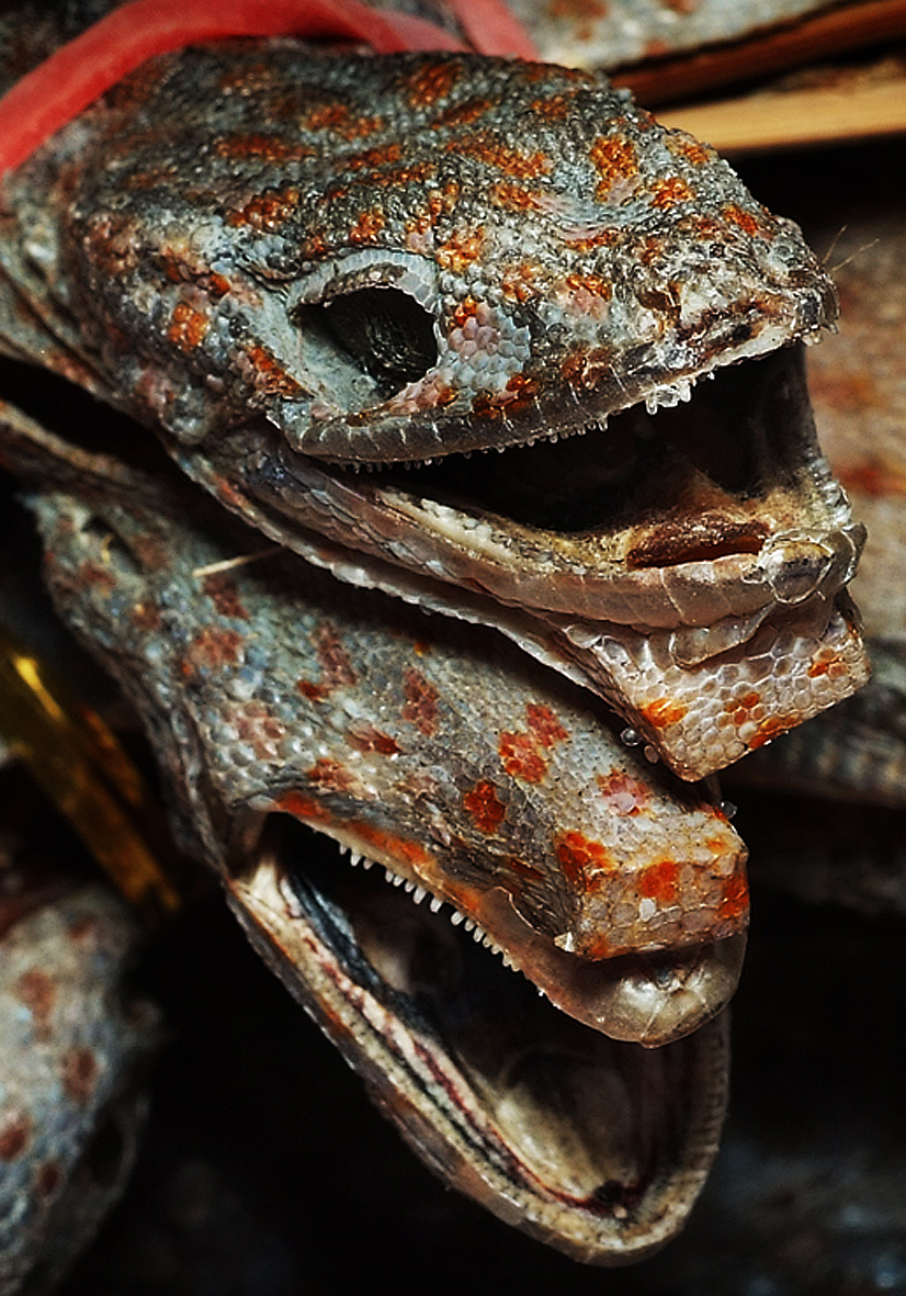 file dried tokay gecko for sale in a chinese medical hall in