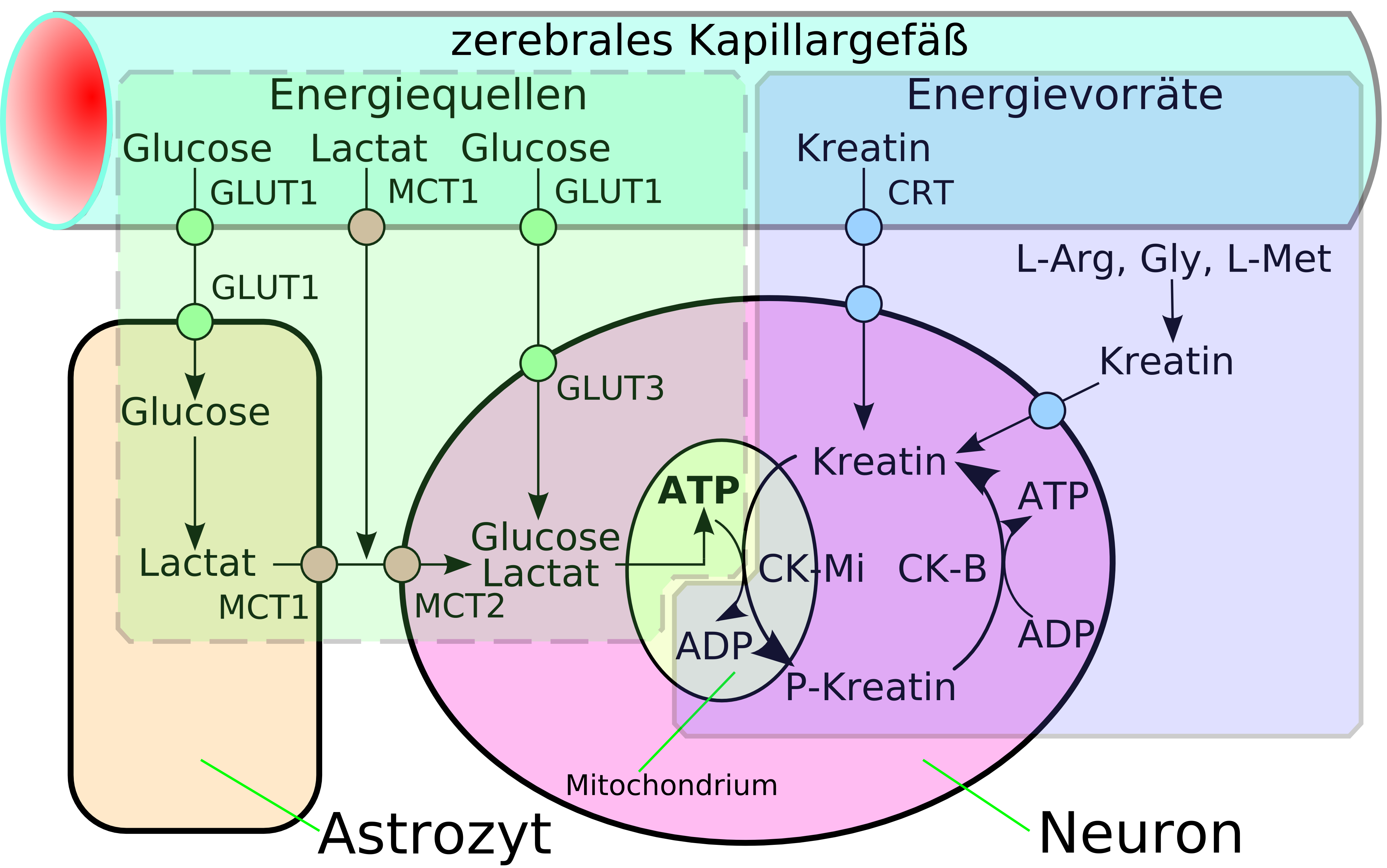 Datei:Energy pathways.png – Wikipedia