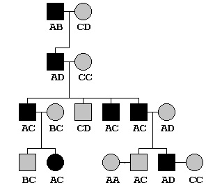 Extended Pedigree example