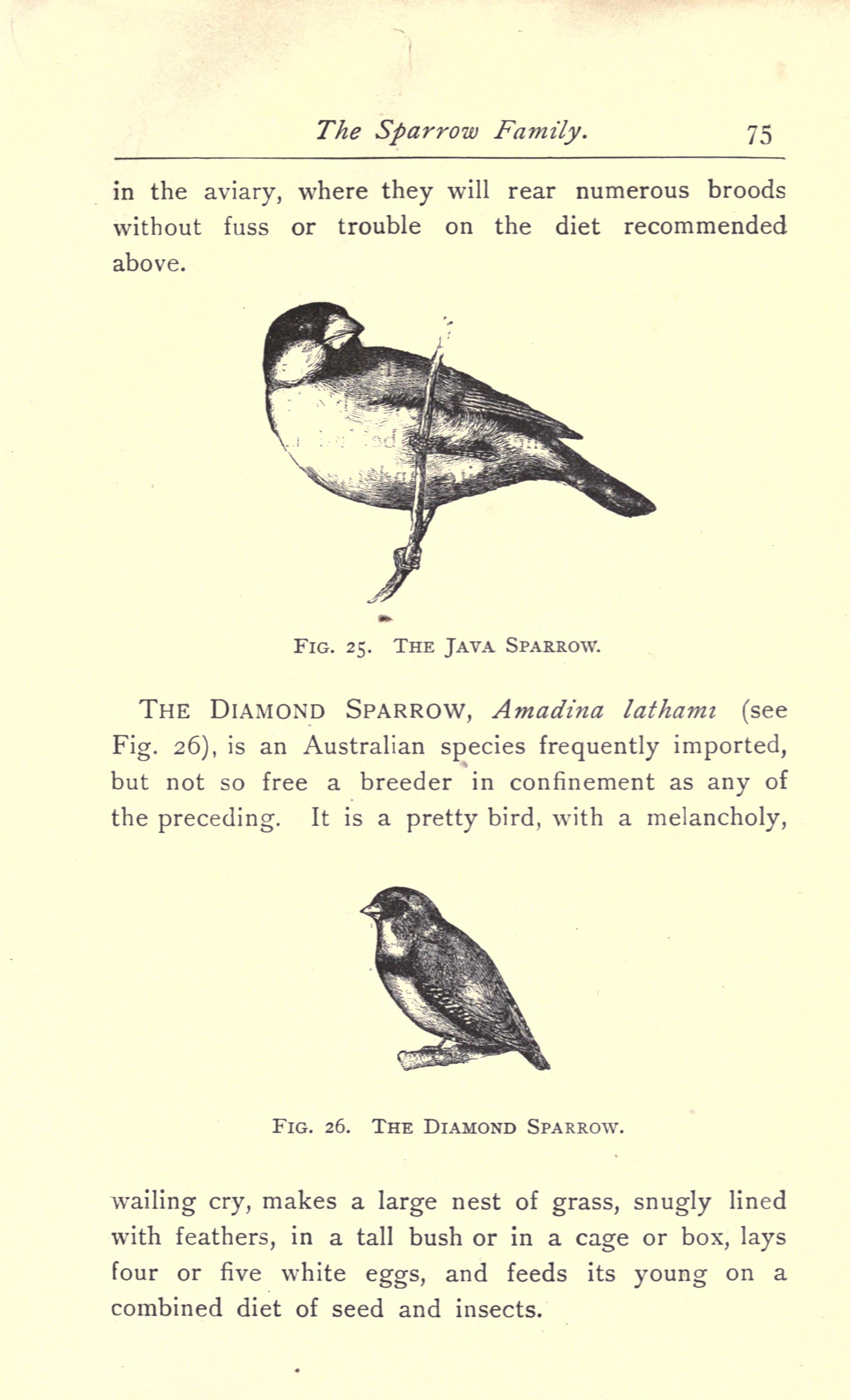 File:Favorite foreign birds for cages and aviaries (Page 75 ...