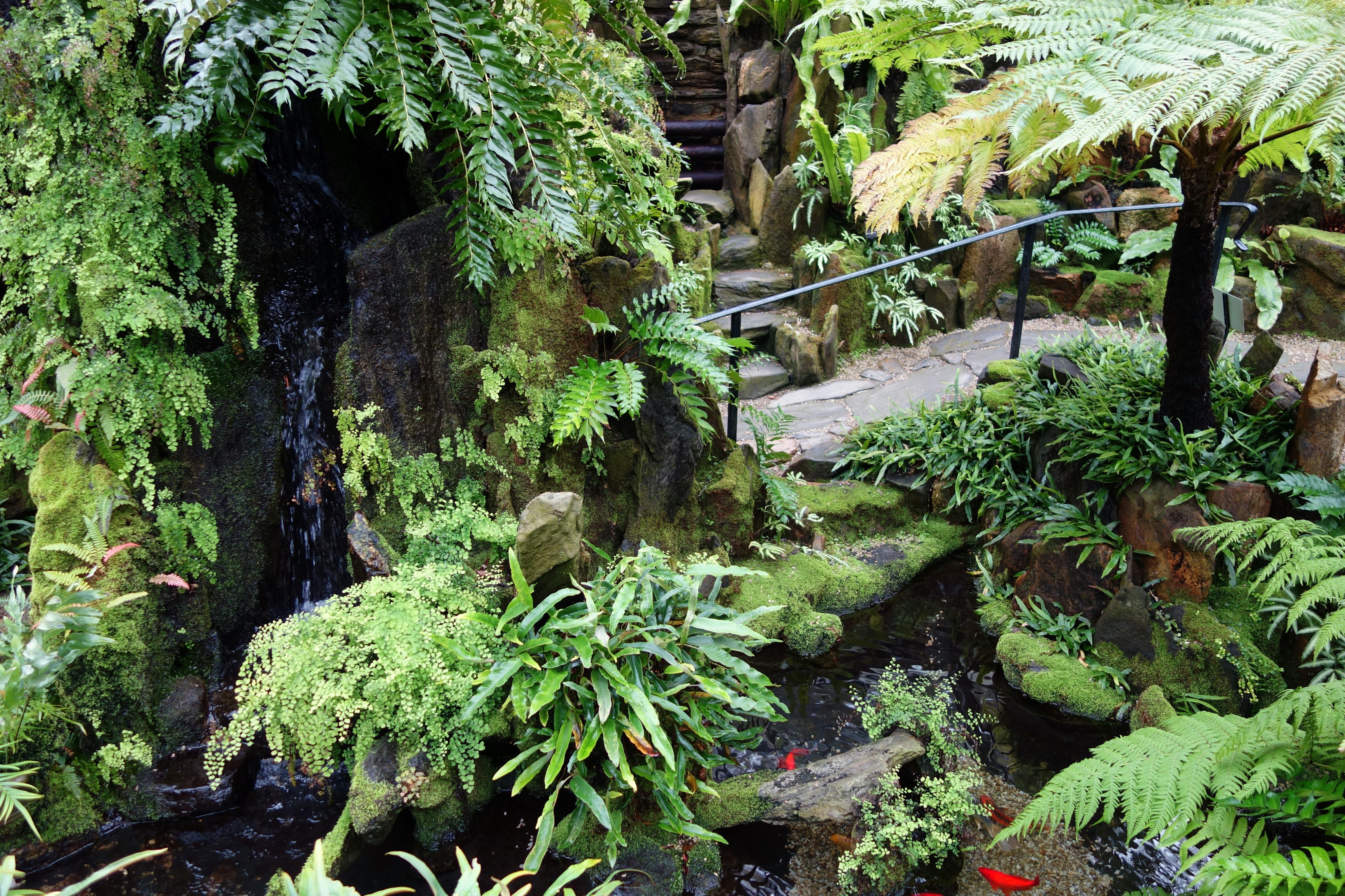 File:Fernery interior view - Morris Arboretum - DSC00191