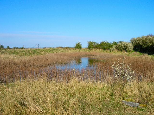 Ferry Pool, Pagham Harbour - geograph.org.uk - 766115