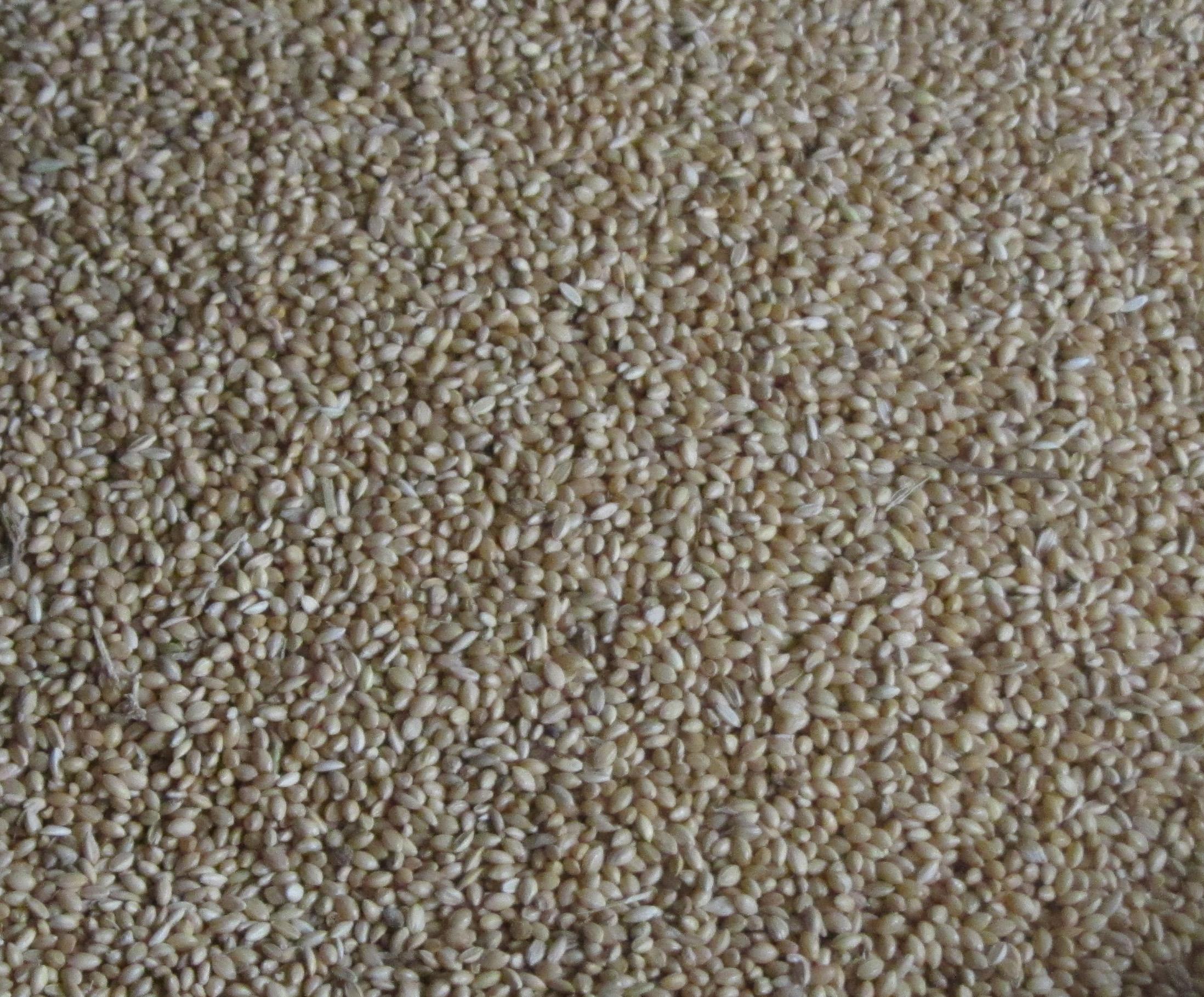 Is Grain Free Cat Food Better