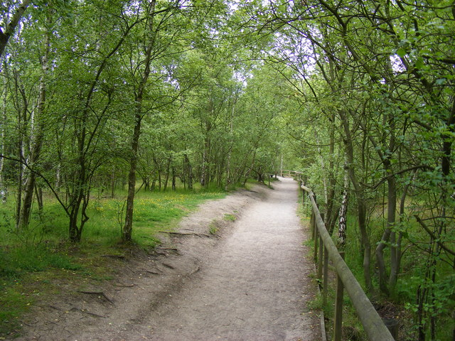 Footpath in Shorne Woods Country Park - geograph.org.uk - 1364604