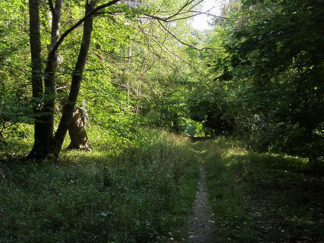 Footpath through Pimlock's wood - geograph.org.uk - 971752