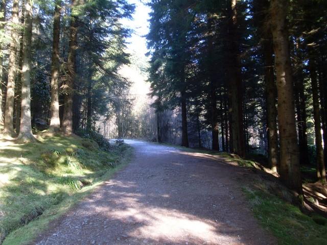 Forest path, Balmaha Plantation - geograph.org.uk - 1727031