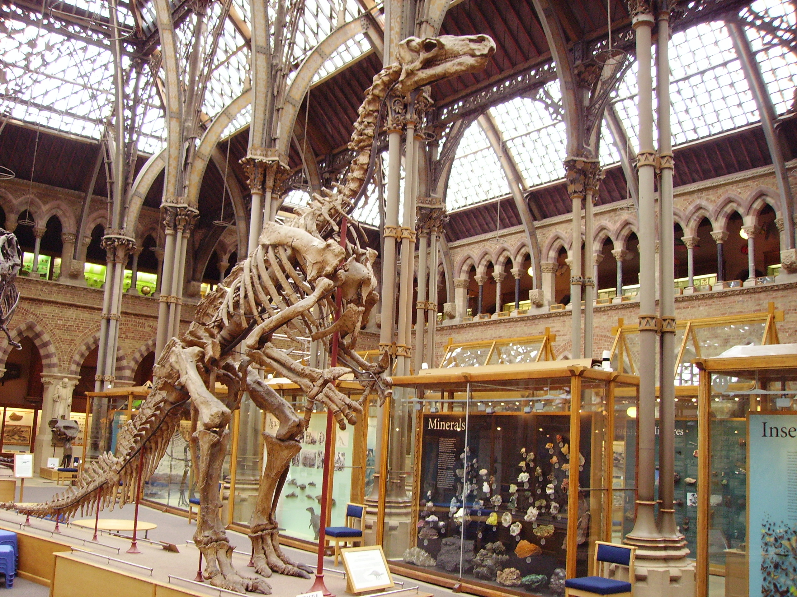 Oxford Museum Of Natural History Dinosaur