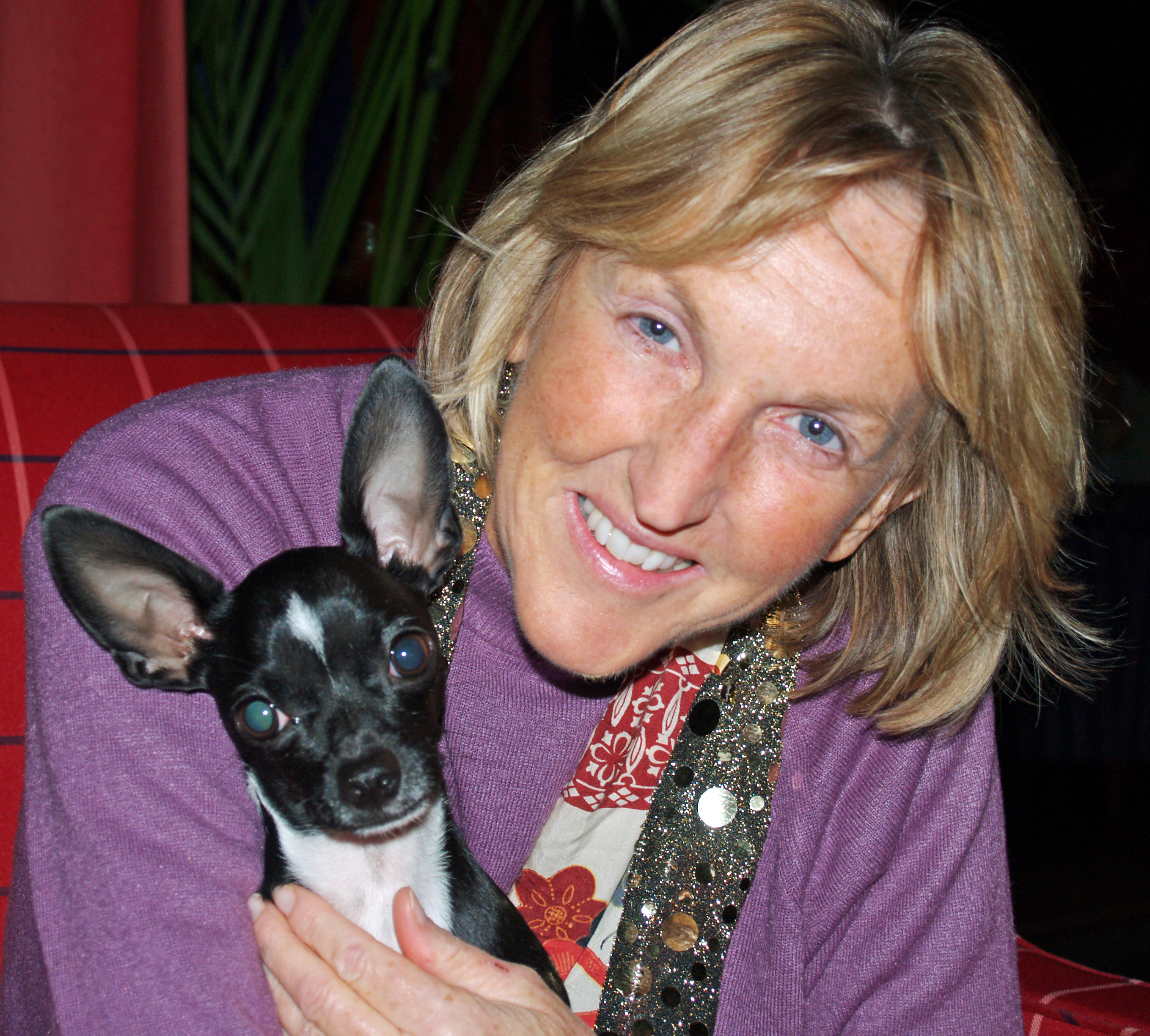 Ingrid Newkirk with Little Man, her photographer's [[chihuahua (dog)|chihuahua]], during [[wikinews:Ingrid Newkirk, co-founder of PETA, on animal rights and the film about her life|an interview for Wikinews]] in 2007.