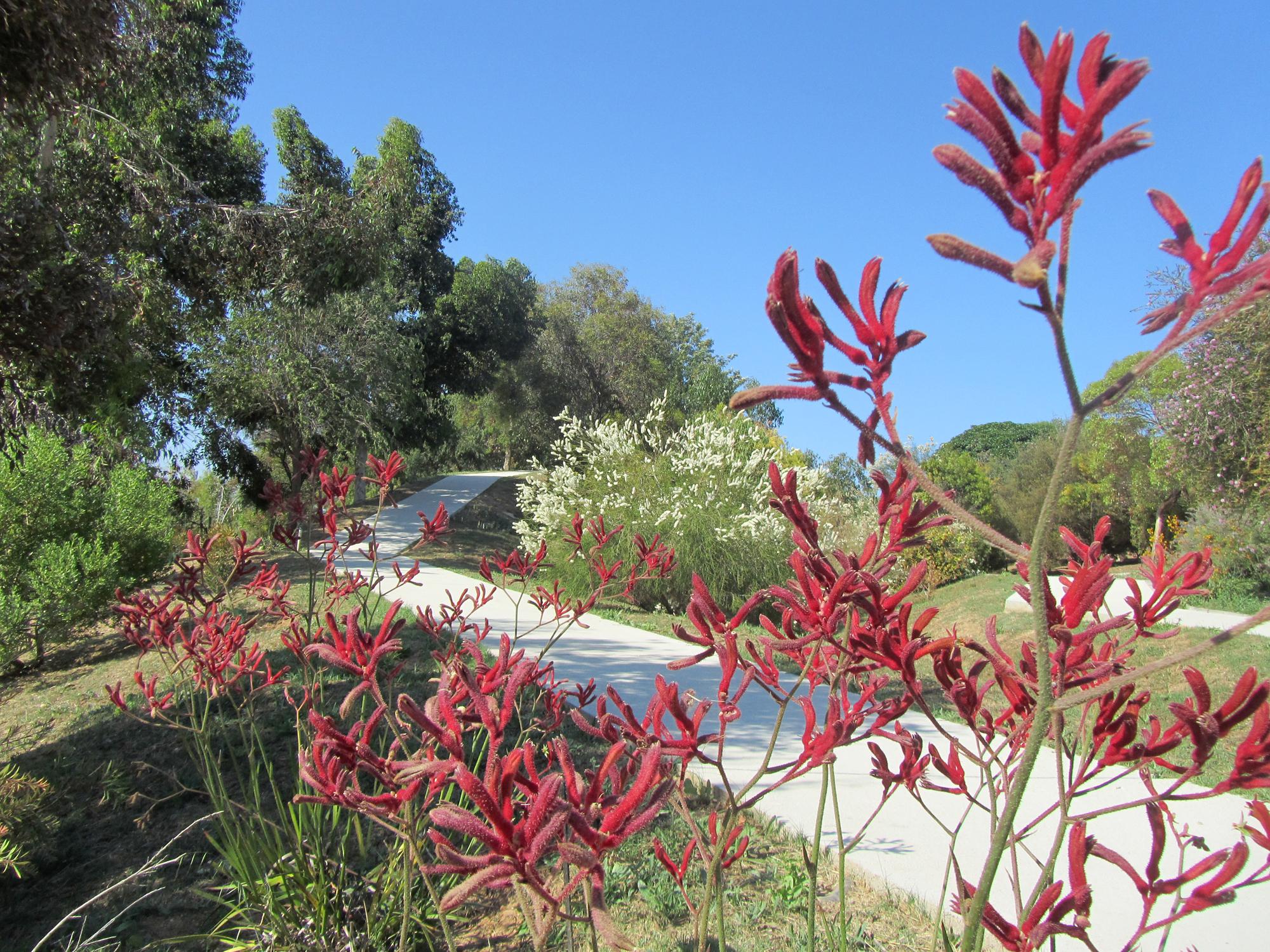 File jardi botanic de wikimedia commons for Botanic com jardin